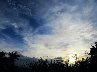Bright Summer Afternoon - Gurabo, PR, 2010
